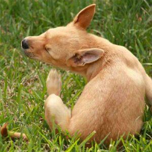 dog-scratching