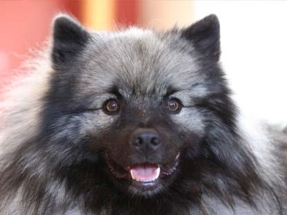 Manuka WashBar for Dogs Washbar Natural Dog Shampoo